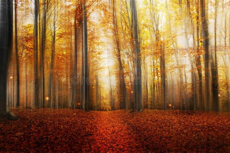 Μαγικός δρόμος στο δάσος φθινοπώρου στοκ εικόνα με δικαίωμα ελεύθερης χρήσης