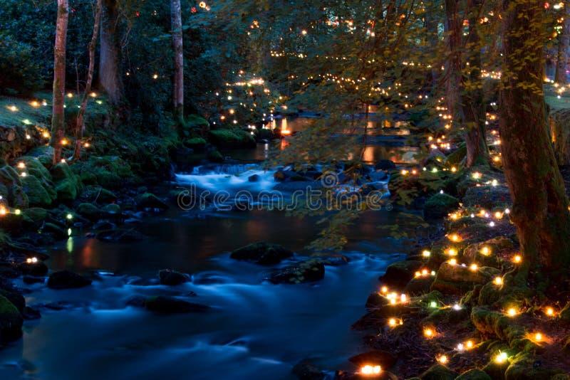 Μαγικό δάσος τη νύχτα στοκ φωτογραφίες με δικαίωμα ελεύθερης χρήσης