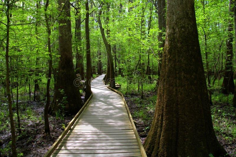 Μαγικό δάσος στοκ εικόνες