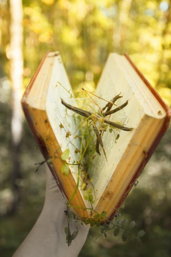Μαγικό βιβλίο που καίγεται με τα κίτρινα φω'τα ενάντια στο όμορφο πράσινο δάσος, μυστήριο, πνευματική κινηματογράφηση σε πρώτο πλ στοκ φωτογραφία