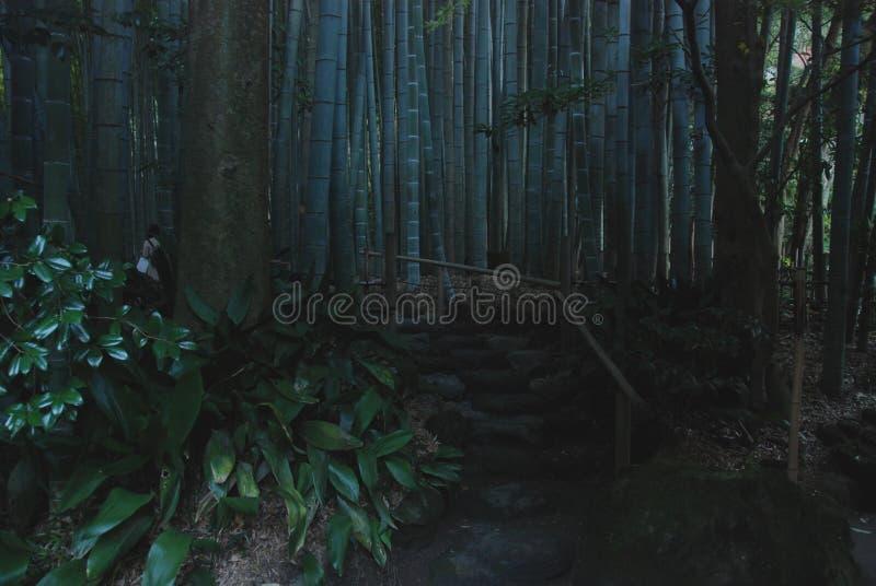 Μαγικό δάσος μπαμπού στοκ φωτογραφία με δικαίωμα ελεύθερης χρήσης