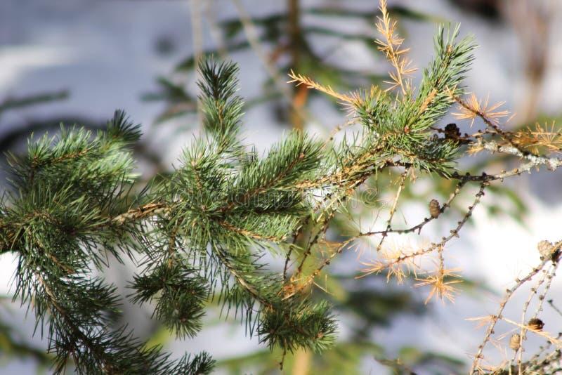 Μαγικό δάσος το χειμώνα στοκ εικόνα με δικαίωμα ελεύθερης χρήσης