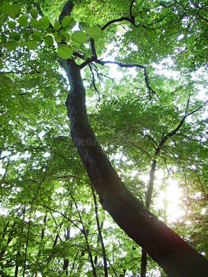 μαγικό δάσος στοκ φωτογραφίες