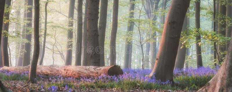 Μαγικό δάσος bluebell στοκ φωτογραφία με δικαίωμα ελεύθερης χρήσης