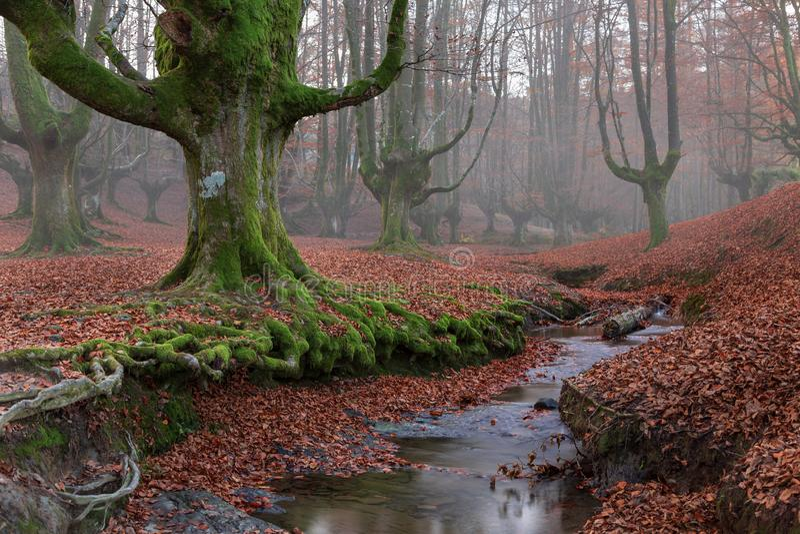Μαγικό νερό μεταξύ των ξύλων οξιών στοκ φωτογραφίες με δικαίωμα ελεύθερης χρήσης