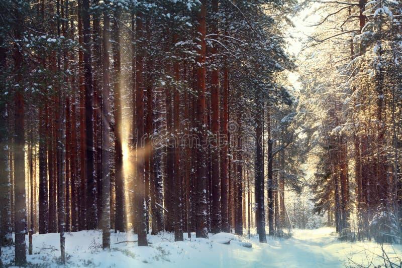 Μαγικό χειμερινό δάσος μια νεράιδα στοκ φωτογραφίες