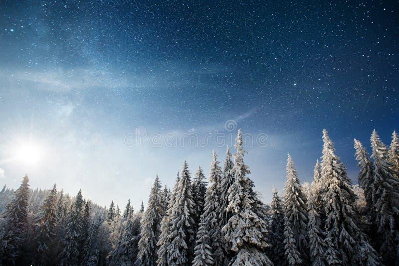 Μαγικό χειμερινό χιονισμένο δέντρο 33c ural χειμώνας θερμοκρασίας της Ρωσίας τοπίων Ιανουαρίου Η χειμερινή λίμνη είναι παγωμένη σ στοκ φωτογραφία