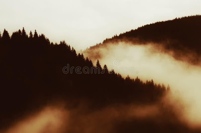 Μαγικό misty τοπίο βουνών πέρα από το δάσος πεύκων στοκ φωτογραφίες με δικαίωμα ελεύθερης χρήσης