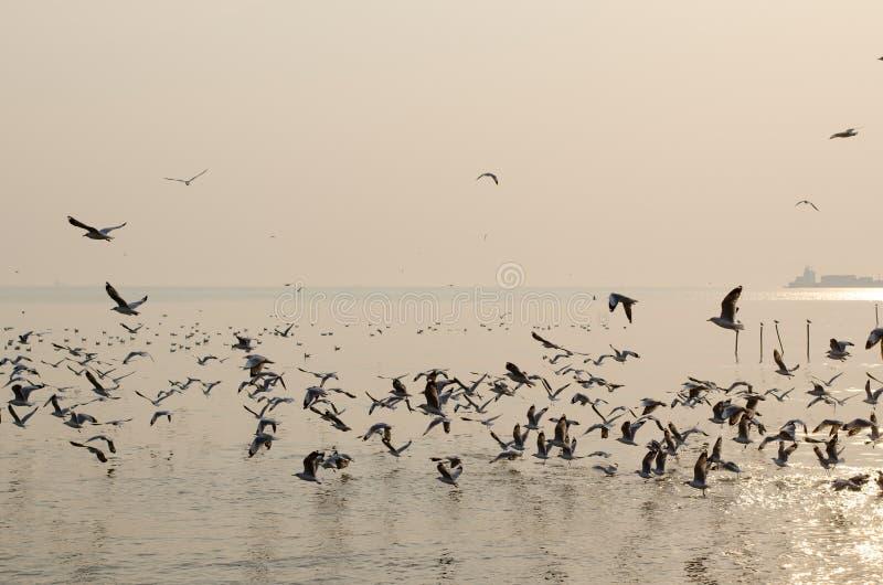 Μαζικό seagull μεταναστεύει στην ΤΑΪΛΑΝΔΗ στοκ εικόνες με δικαίωμα ελεύθερης χρήσης