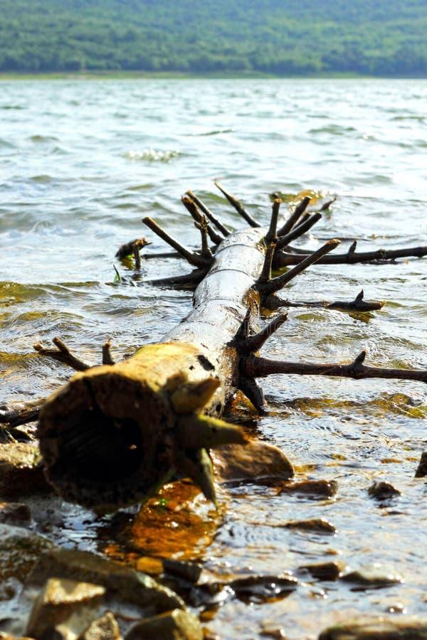 Μακριά ξύλινη ακτίνα εκτός από τη λίμνη. στοκ εικόνα