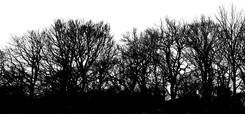 Download μακριά shadowtrees στοκ εικόνα. εικόνα από πανόραμα, περίγραμμα - 13187935