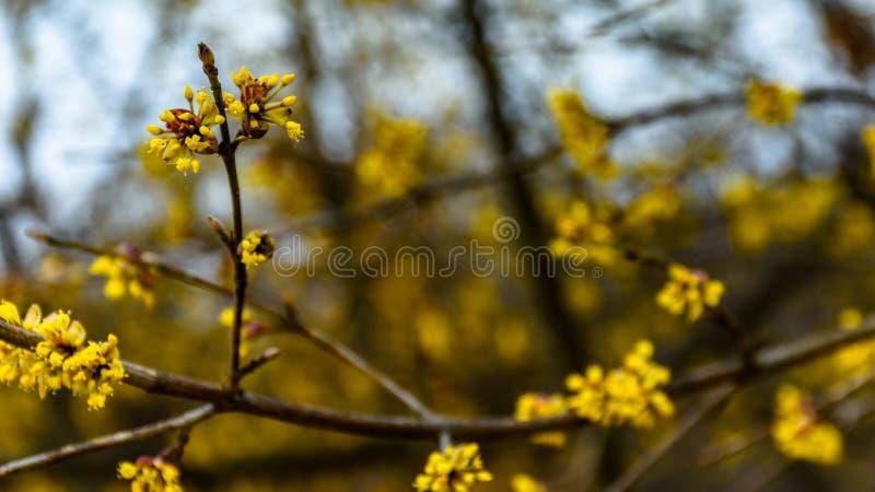 Μακροεντολή κερατοειδούς-δέντρων άνθισης στοκ εικόνες με δικαίωμα ελεύθερης χρήσης