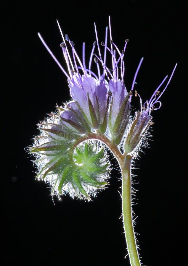 μακροεντολή λουλουδιών άνθισης στοκ φωτογραφίες με δικαίωμα ελεύθερης χρήσης