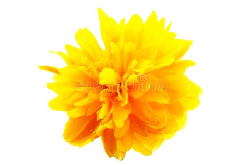 μακροεντολή λουλουδ&i στοκ εικόνα