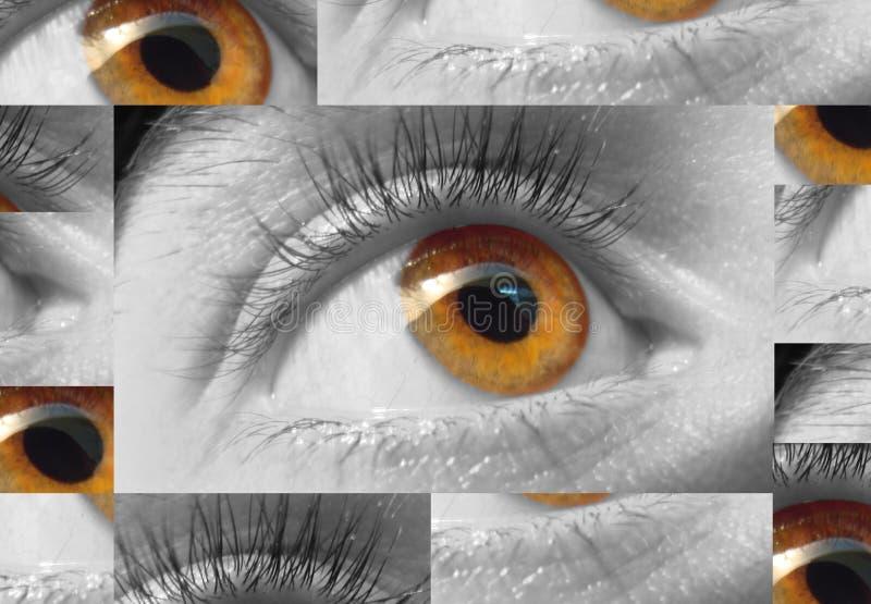 μακροεντολή ματιών στοκ εικόνα