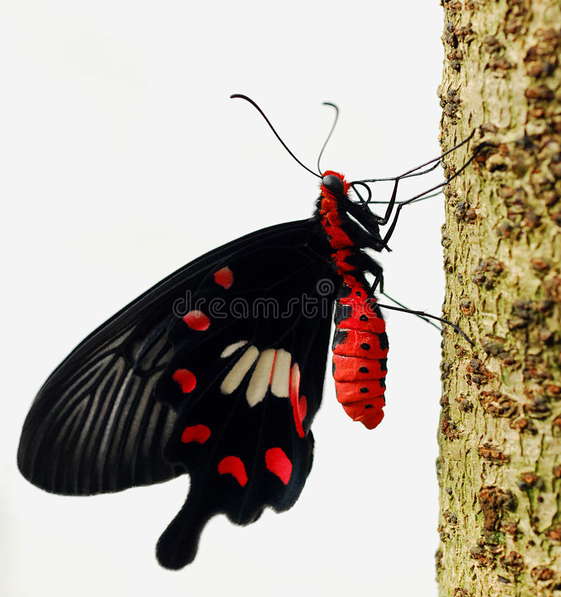 μακροεντολή πεταλούδων στοκ φωτογραφίες