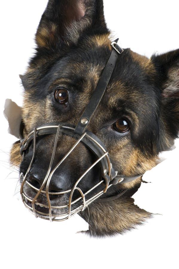 μακροεντολή σκυλιών στοκ εικόνες με δικαίωμα ελεύθερης χρήσης