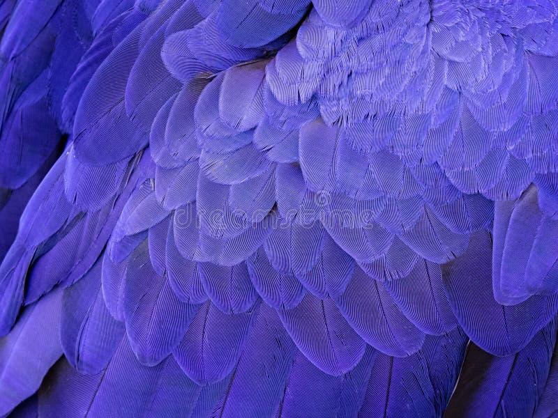 Μακροεντολή στα φτερά ενός υάκινθων Macaw στοκ εικόνες