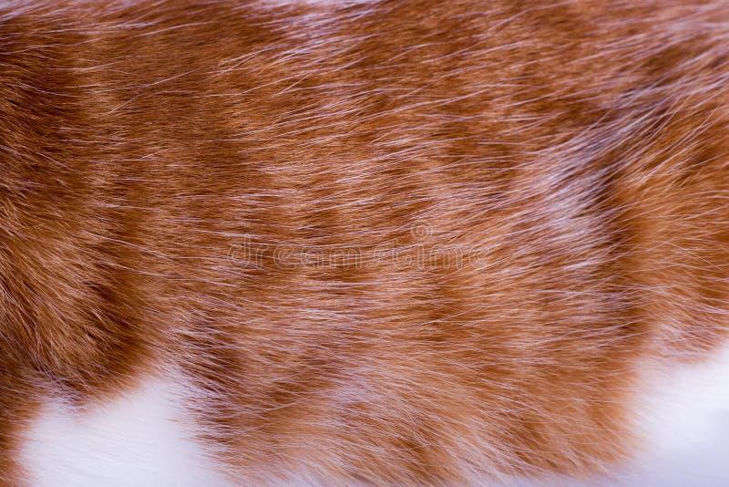 Μακροεντολή της τρίχας γατών ` s πιπεροριζών στοκ εικόνες με δικαίωμα ελεύθερης χρήσης
