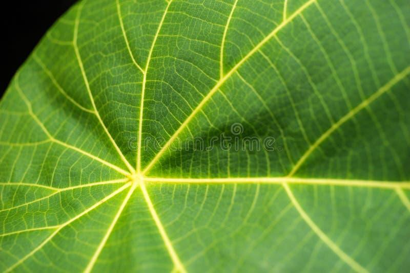 Μακροεντολή ενός φύλλου στοκ φωτογραφία με δικαίωμα ελεύθερης χρήσης