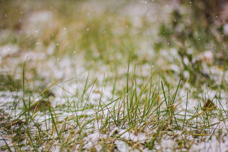 Μακροεντολή της φρέσκιας πράσινης χλόης που καλύπτεται με το χιόνι στοκ φωτογραφία με δικαίωμα ελεύθερης χρήσης