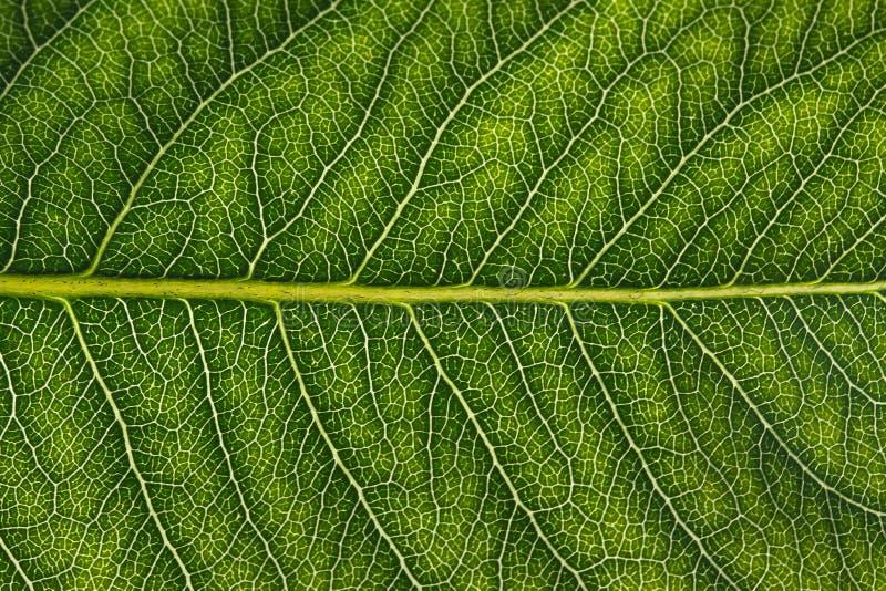 Μακροεντολή του φύλλου στοκ εικόνες με δικαίωμα ελεύθερης χρήσης