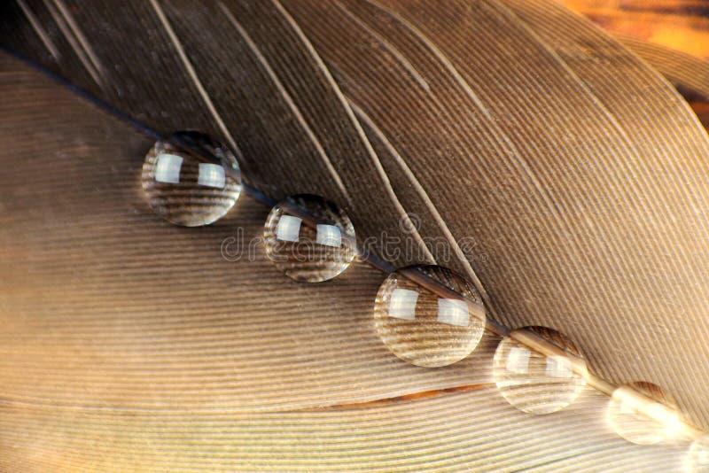 Μακροεντολή φτερών στοκ εικόνα με δικαίωμα ελεύθερης χρήσης