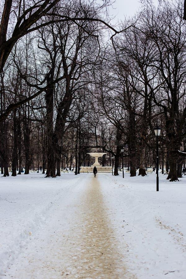 Μακροχρόνια άποψη telephoto του ατόμου που περπατά κατά μήκος του χιονώδους δρόμου σε ένα πάρκο στη Βαρσοβία, Πολωνία, δέντρα χωρ στοκ εικόνα