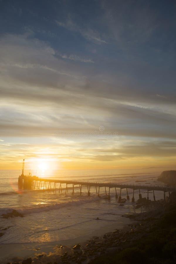 Download μακροχρόνιο ηλιοβασίλε& στοκ εικόνα. εικόνα από εμπορικός - 22777639