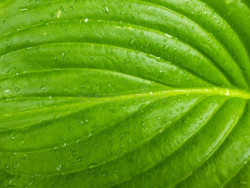 Μακρο άποψη ενός πράσινου φύλλου ενός φυτού με τα σταγονίδια νερού στοκ φωτογραφίες