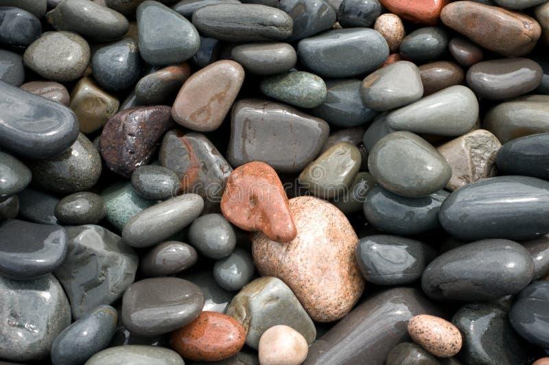μακρο ανώτερος βράχων λιμ& στοκ εικόνα