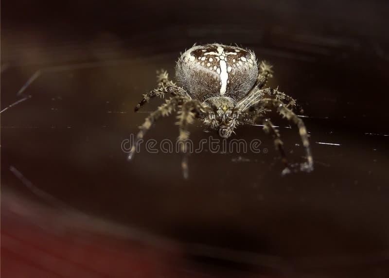 Download μακρο αράχνη στοκ εικόνα. εικόνα από ιστός, οκτώ, έντομο - 55095