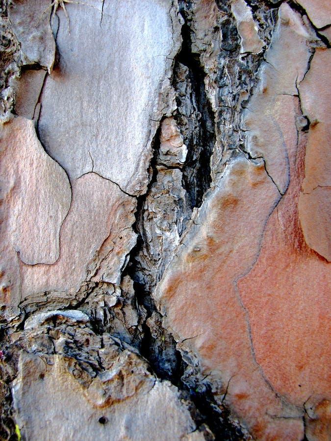 μακρο δέντρο πεύκων φλοιώ&nu στοκ εικόνες