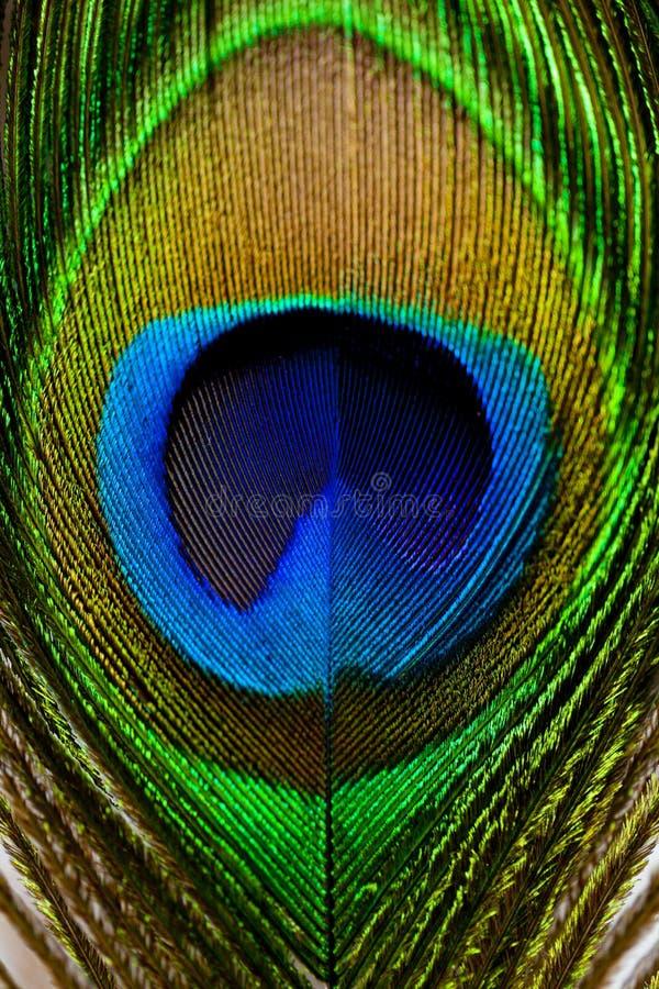 Μακρο εικόνα του φτερού peacock/του φτερού Peacock στοκ εικόνες