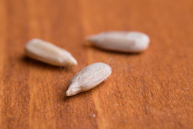 μακρο ηλίανθος σπόρων στοκ φωτογραφία