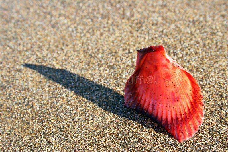 Download μακρο θαλασσινό κοχύλι στοκ εικόνα. εικόνα από κίνηση, θάλασσα - 379281