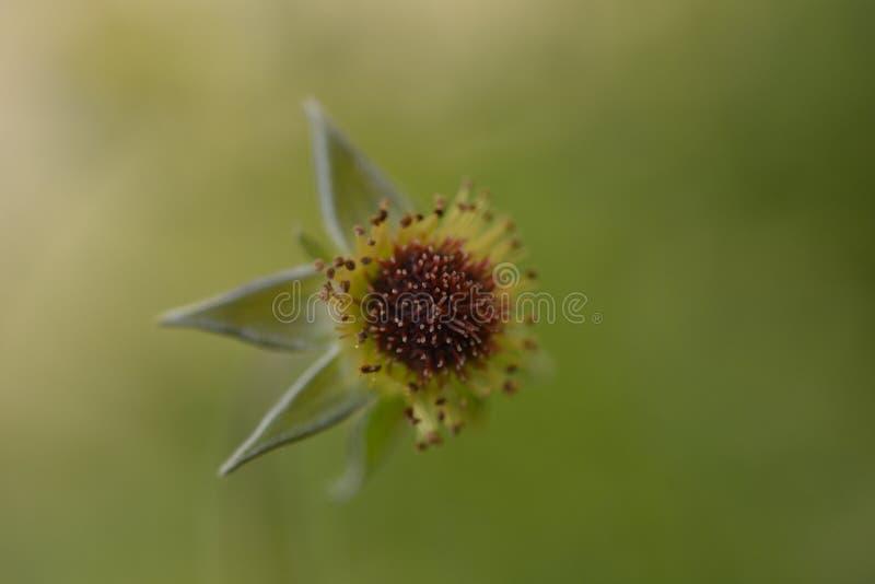 Μακρο κάρδος λουλουδιών στοκ εικόνες με δικαίωμα ελεύθερης χρήσης