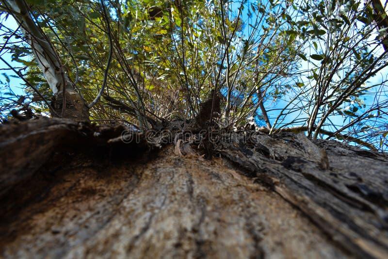 Μακρο κινηματογράφηση σε πρώτο πλάνο που ανατρέχει ένα δέντρο στοκ εικόνες με δικαίωμα ελεύθερης χρήσης