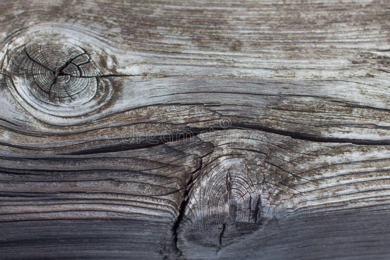 μακρο κινηματογράφηση σε πρώτο πλάνο του κολοβώματος δέντρων με τα δαχτυλίδια κόμβων και δέντρων στοκ φωτογραφία με δικαίωμα ελεύθερης χρήσης