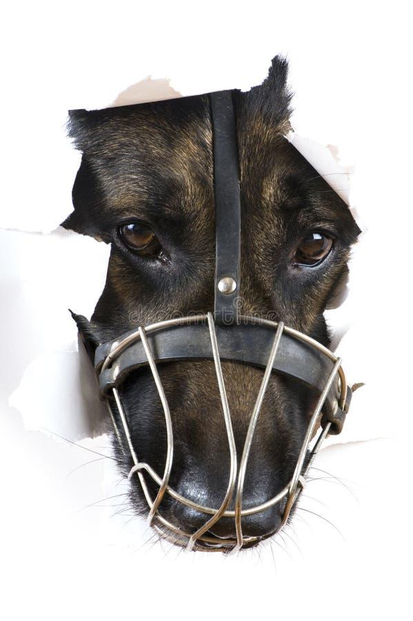 μακρο λευκό ρυγχών σκυ&lambda στοκ φωτογραφία με δικαίωμα ελεύθερης χρήσης
