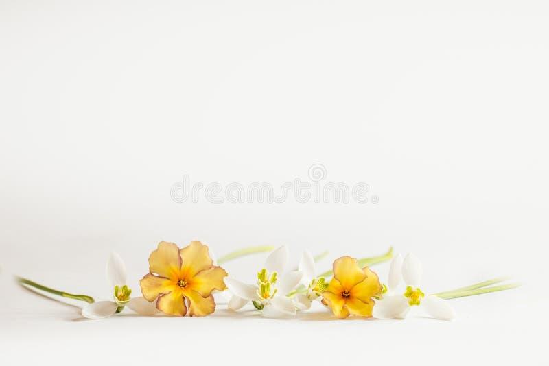 Μακρο λουλούδι ανοίξεων - snowdrops Gallanthus και primroses που απομονώνονται στο άσπρο υπόβαθρο στοκ εικόνες με δικαίωμα ελεύθερης χρήσης