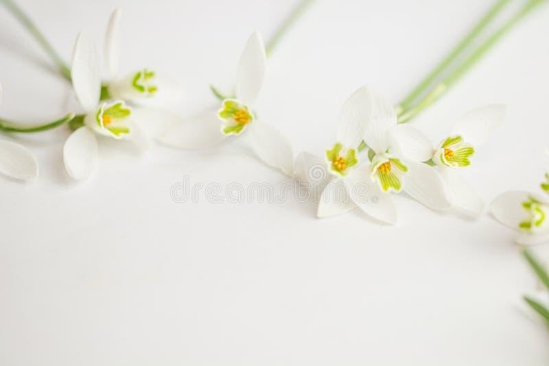Μακρο λουλούδι ανοίξεων - snowdrops Gallanthus που απομονώνεται στο άσπρο υπόβαθρο στοκ εικόνα με δικαίωμα ελεύθερης χρήσης