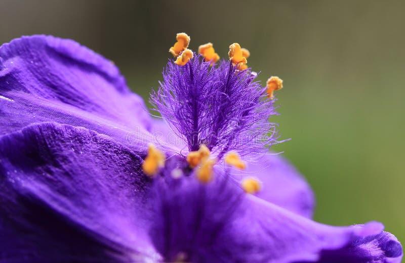 Μακρο λουλούδι στοκ φωτογραφίες με δικαίωμα ελεύθερης χρήσης