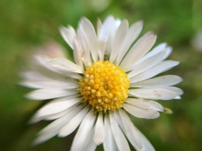 Μακρο λουλούδι στοκ εικόνες