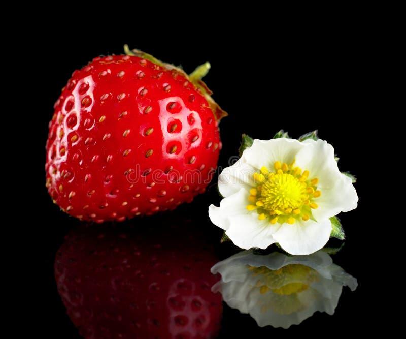 Μακρο ολόκληρα φράουλα και λουλούδι που απομονώνονται στο Μαύρο στοκ εικόνες