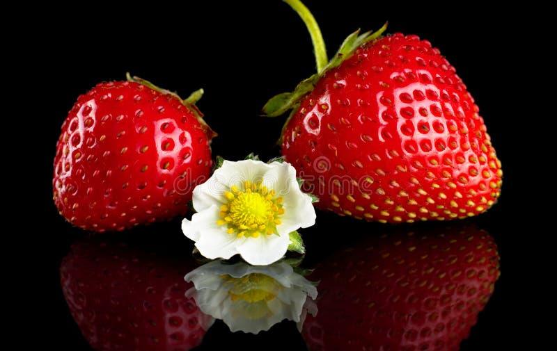 Μακρο ολόκληρα φράουλες και λουλούδι που απομονώνονται στο Μαύρο στοκ φωτογραφίες με δικαίωμα ελεύθερης χρήσης