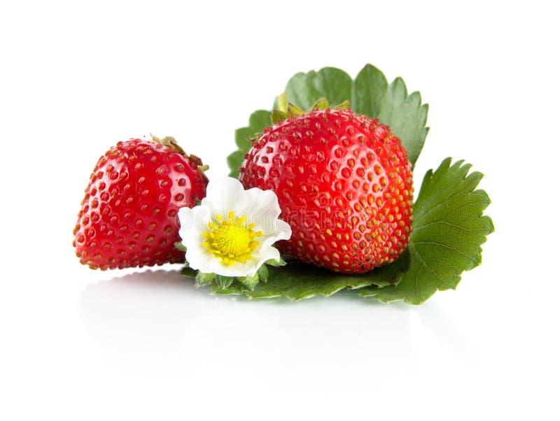 Μακρο ολόκληρες φράουλες το φύλλο και το λουλούδι που απομονώνονται με στο λευκό στοκ φωτογραφία με δικαίωμα ελεύθερης χρήσης