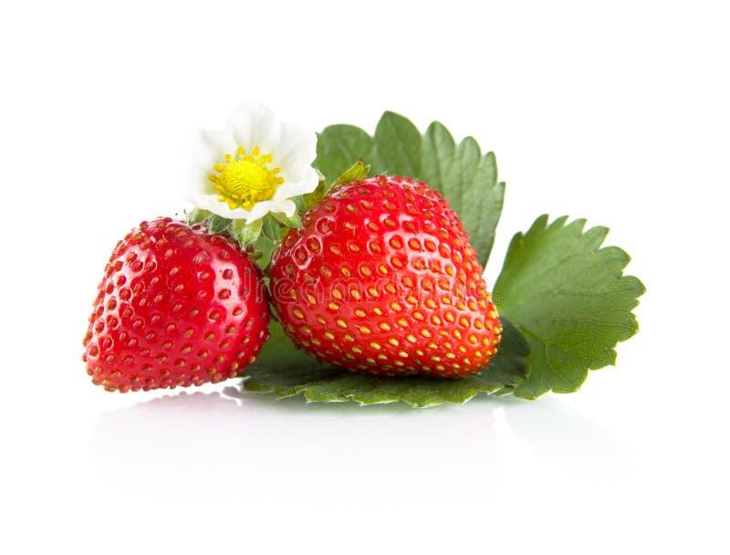 Μακρο ολόκληρες φράουλες το φύλλο και το λουλούδι που απομονώνονται με στο λευκό στοκ εικόνες με δικαίωμα ελεύθερης χρήσης