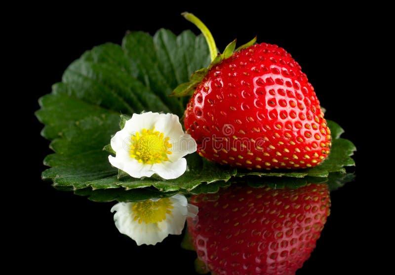 Μακρο ολόκληρη φράουλα με το φύλλο και λουλούδι που απομονώνεται στο Μαύρο στοκ φωτογραφία με δικαίωμα ελεύθερης χρήσης