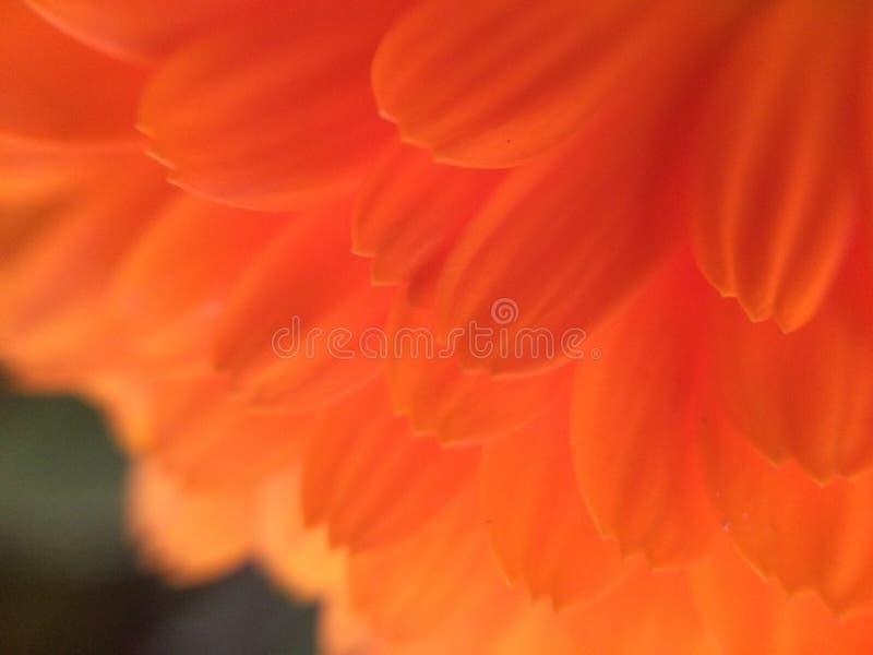 Μακρο πέταλο υποβάθρου εγκαταστάσεων λουλουδιών στοκ φωτογραφίες